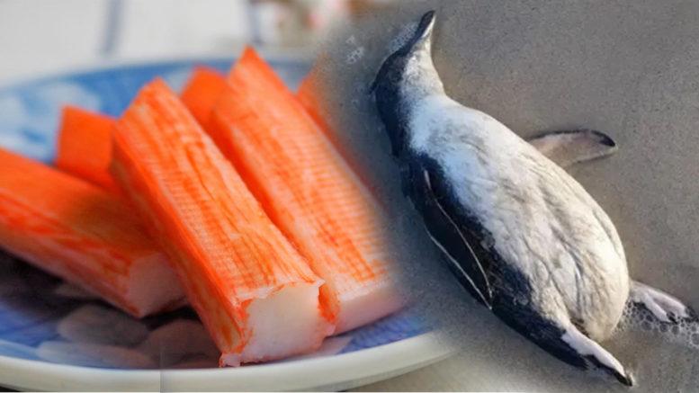 Pinguin mort surimi dead penguin